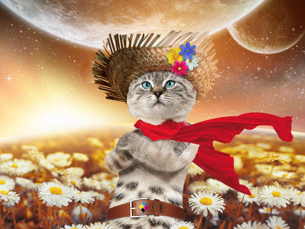 Un chat debout avec chale rouge devant un champ de fleurs