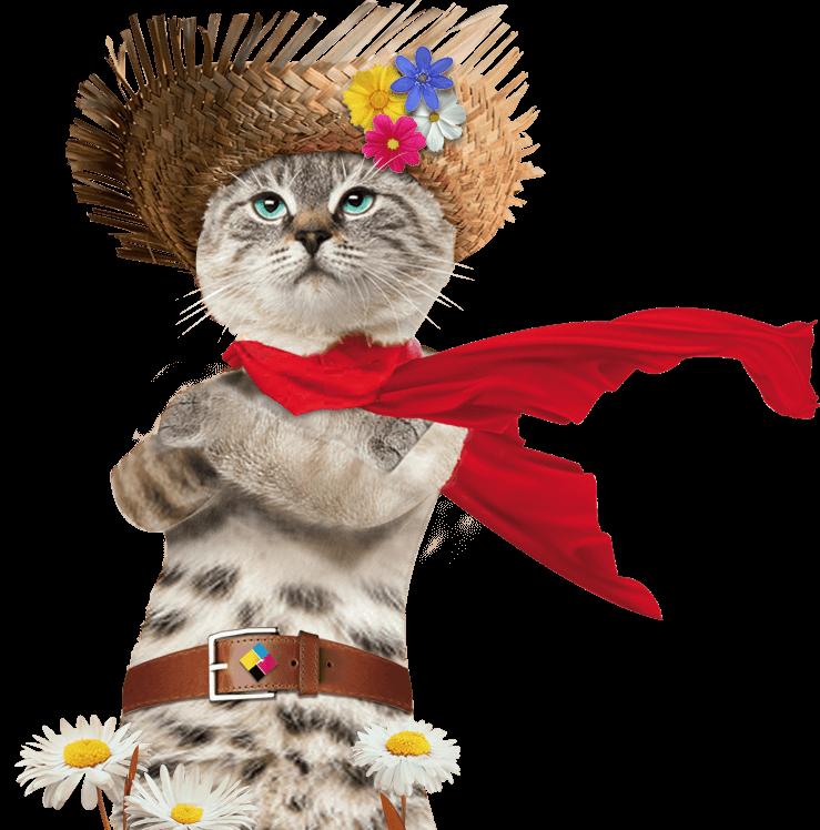 Un chat debout avec chale rouge